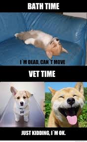 Dog Jokes Meme - bath time or vet time what breed is it