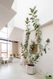indoor trees potted plants home decor large indoor planters