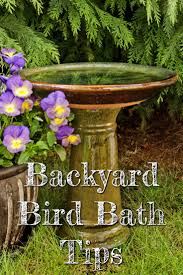 backyard bird bath tips do you need a bird bath in your yard