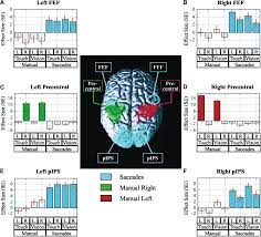multimodal spatial representations engaged in human parietal