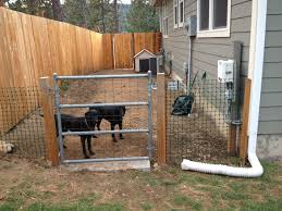backyard ideas for dogs brilliant ideas of side yard dog run our house projects pinterest