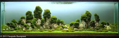 Aquascape Environmental Pin By Ray Kim On Aquascape Inspirations Pinterest Aquariums