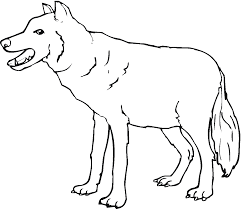 wolf coloring page chuckbutt com