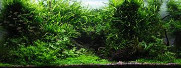 Most Beautiful Aquascapes Planted Aquarium Gallery Green Leaf Aquariums