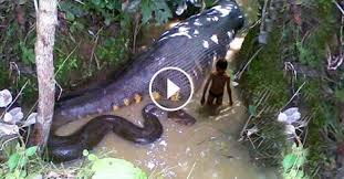 vidio film ular anaconda anaconda gigante anaconda gigante anaconda emerge del amazonas