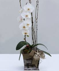 Orchid Delivery Orchid Delivery Los Angeles Ca French Florist