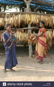 desia kondh tobacco growing village in orissa stock photo royalty