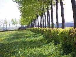 planting a native hedge hedge wikipedia