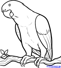 17 best images about parrot drawings on pinterest and parrot