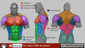 Body Anatomy Back How To Draw Man Muscles Body Anatomy Drawing And Digital