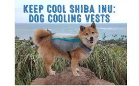 Shiba Inu Meme - shiba inu meme what is a doge exactly my first shiba inu