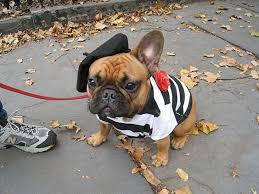 English Bulldog Halloween Costumes 12 Costumes Prove French Bulldogs Win Halloween