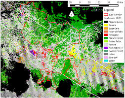 remote sensing free full text mapping species composition of
