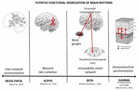 frontiers oscillatory activities in neurological disorders of