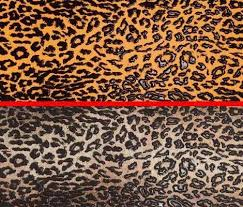 Animal Print Wall Decor 30 Of Gallery Animal Print Decor For Home Interior Wall Decoration