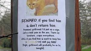 Missing Cat Meme - i can has cheezburger missing cat funny animals online