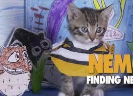 Kitten Halloween Costumes Pet Funny Archives Legged Guru