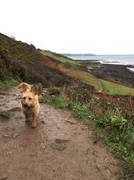 5 great dog walks around looe u0026 the surrounding areas u2013 the dog