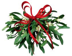 where to buy mistletoe where to find mistletoe bob vila