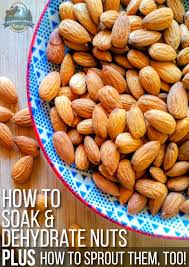 how to soak and dehydrate nuts plus how to sprout nuts