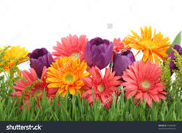 spring flowers backgrounds u2013 happy easter 2017