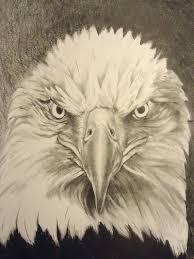 american bald eagle fierce eagle american eagle