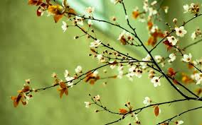 Image Of Spring Flowers by Spring Flowers Wallpaper Desktop Best Spring Flowers Images