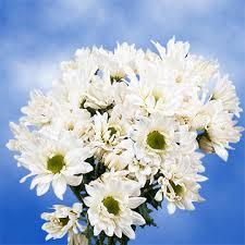 flowers online cheap white pom poms flowers online cheap global