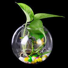 10cm hanging plant terrarium glass flower vase bottle fish pot
