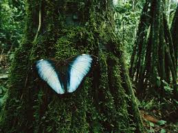 butterfly and trees madidi national park bolivia