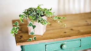 6 indoor plants that will absorb humidity in your home