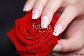 pretty french nails on a red rose