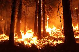 Current Wildfires In Canada by Canadian Lumber Prices May Rise As Wildfires Ravage Region
