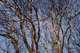 how to put lights on a tree outdoors best way to wrap lights on outdoor trees outdoor designs