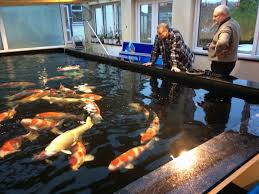 decoration awesome indoor ponds for best harmony in your room decoration awesome indoor ponds for best harmony in your room luxury big on ground koi pond home
