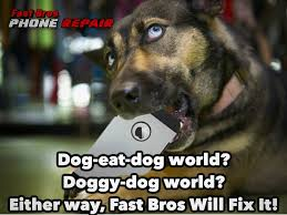 Dog Phone Meme - fast bros phone repair specializes in fast bros phone repair