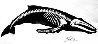 whale skeleton tattoo design by ebentson on deviantart