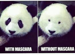 Panda Meme Mascara - amazing panda meme mascara no mascara panda pictures inspirational