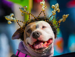 mardi gras dog dog days of summer mardi gras style bank now