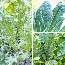 5 ways to garden with kale