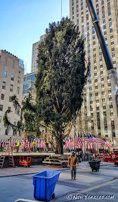 the rockefeller center christmas tree arrives photos new yorkled
