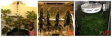 growing autoflower with led lights autoflower grow box design planning autoflowering cannabis blog