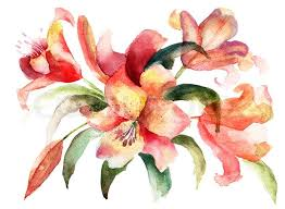 Lily Flowers Lily Flowers Watercolor Illustration Stock Photo Colourbox