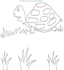 tortoise coloring page printable for kids