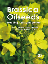brassica oilseeds breeding and management rapeseed earth