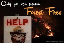 Only You Can Prevent Forest Fires Meme - way to prevent forest fires best forest in the world 2017