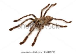spider venom stock images royalty free images vectors