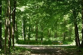 Plz Weingarten Baden Gemeindewald Forst Weingarten Pfalz