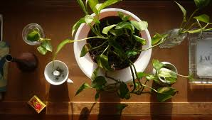 10 Best Houseplants To De by Apartment Living 101 The 10 Best Plants For Apartment Dwellers