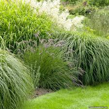 carefree ornamental grass pre planned garden american